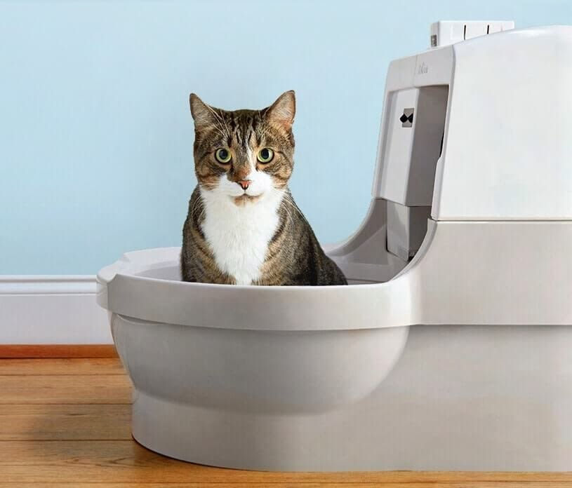 Cat Genie cat litter box
